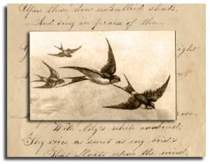 sepiabirds2