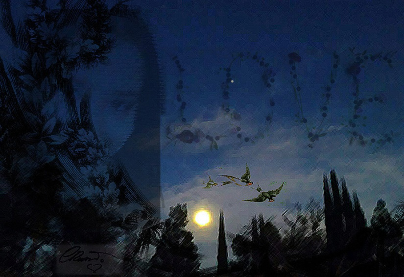 Nocturn full moon