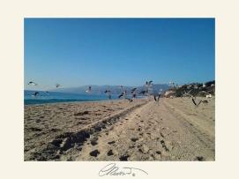 Gabbiani (Seagulls)