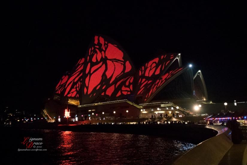 Australia Sidney - VIVID Randomness 2015 - Photography Lignum Draco©