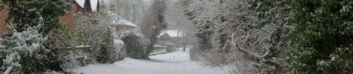 cropped-snow-dog-039