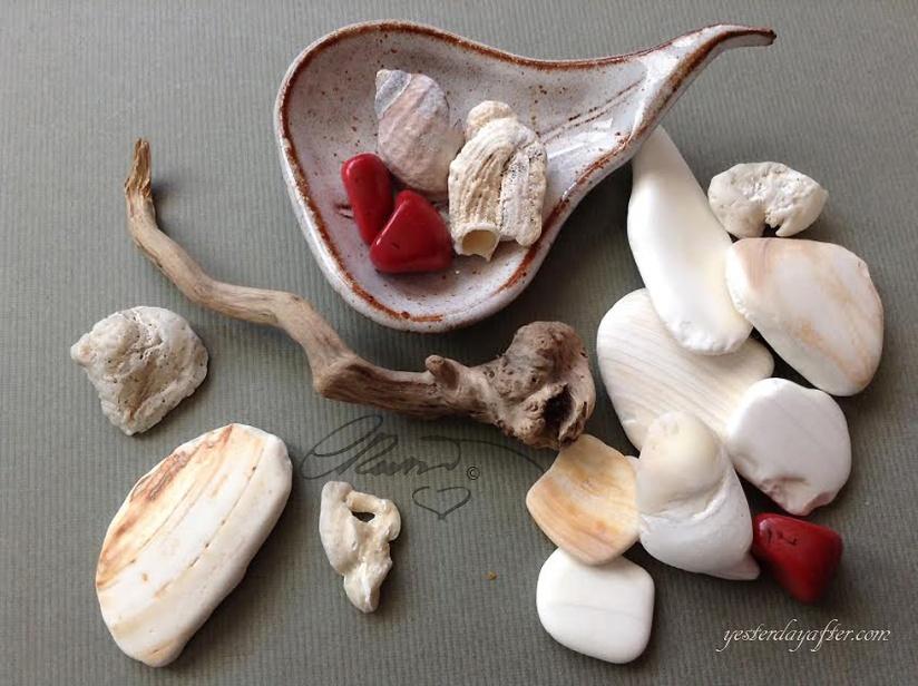 Fossil Seashelles Fragments, Driftwood