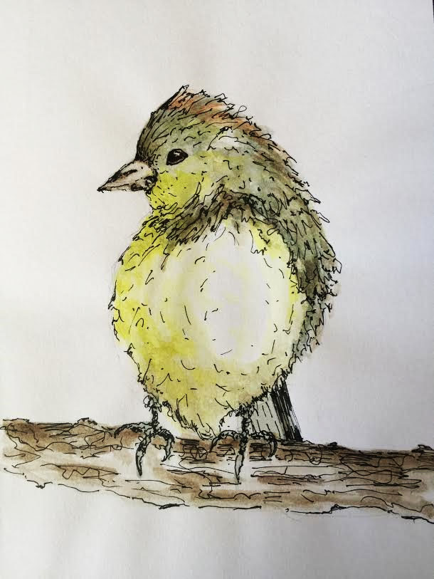 Orange Crowned Warbler - Original Watercolor ©Carolina Russo