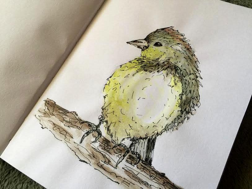 California Bird2x