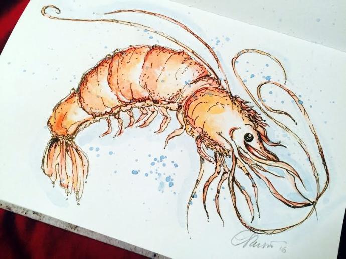 Shrimp - Original Watercolor ©Carolina Russo