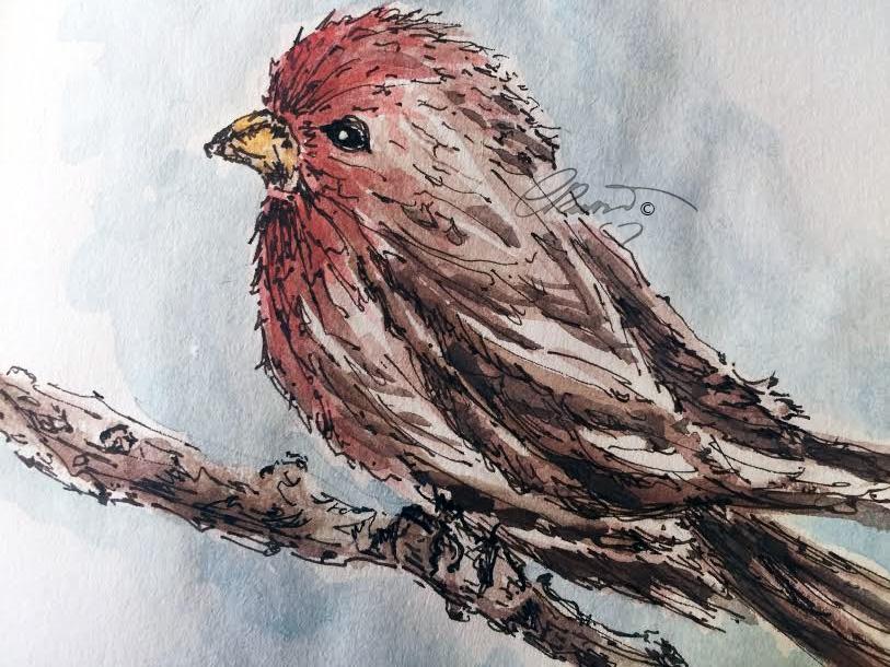 Red Breast Bird - Original Watercolor ©Carolina Russo