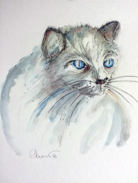 Dolly - Blue Eyed Cat ©CarolinaRusso