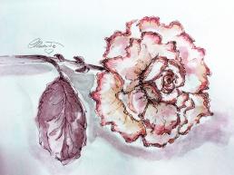Day #28 - Pink Rose