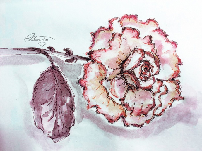 Day #28 -  World Watercolor Month  - Pink Rose  - ©Carolina Russo