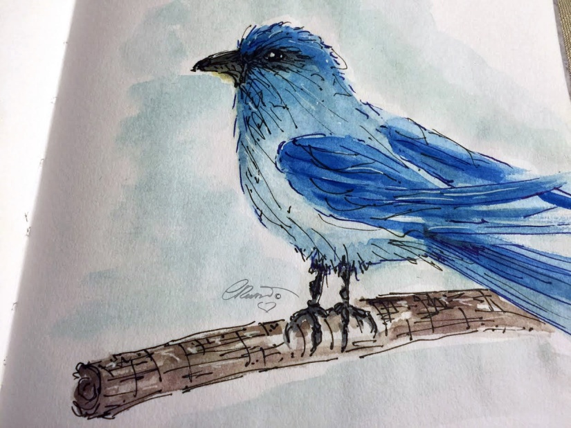 BlueBird (California) ©Carolina Russo