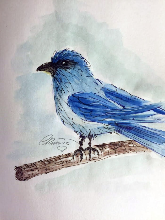 Bluebird - ©Carolina Russo
