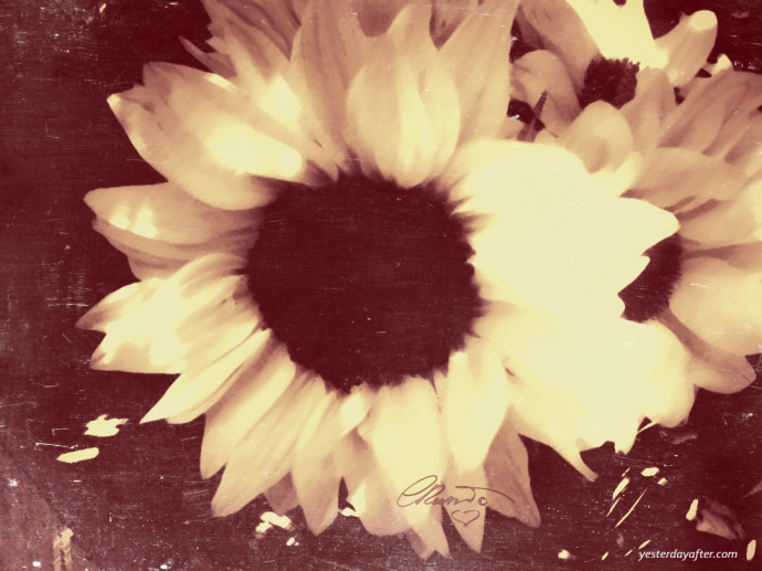 Sunflower - Digital Art ©Carolina Russo