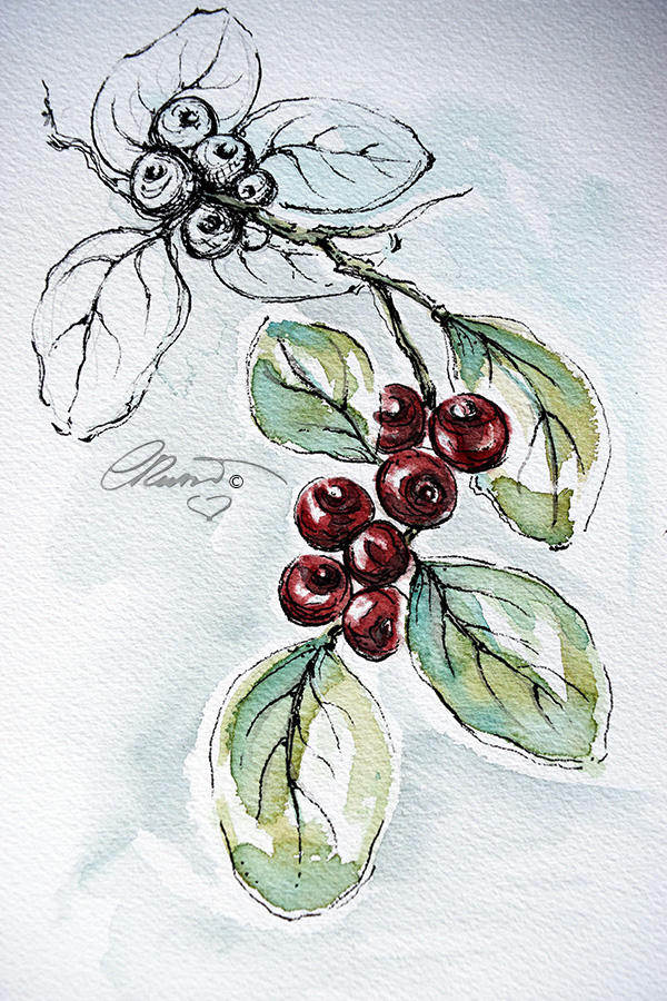 Cranberriess - Original Watercolor ©Carolina Russo