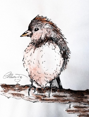 Bird of Southern California - Original Watercolor ©CarolinaRusso