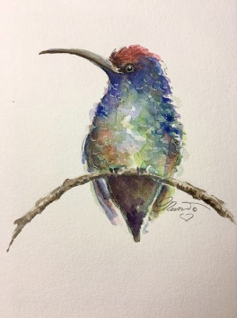 Hummingbird - Original Watercolor ©CarolinaRusso