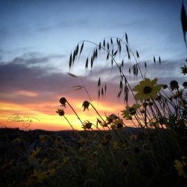 A Blossomed Sunset In April - Photo ©Carolina Russo