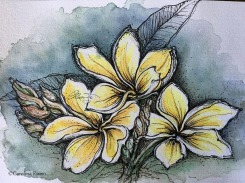 Plumeria Flowers - Original Watercolor Ink ©Carolina Russo