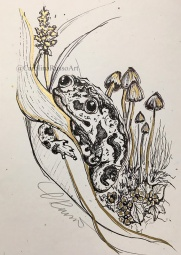 Day 8 Frail - Toad ©Carolina Russo